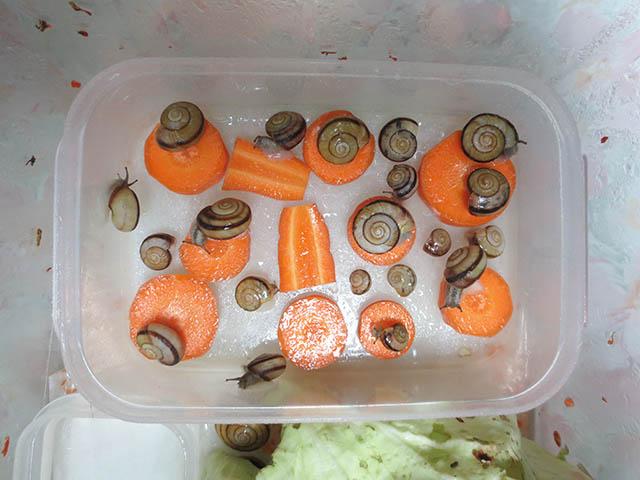 Snail, #4345
