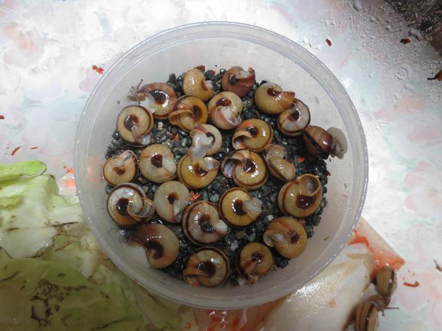 Snail, #4347