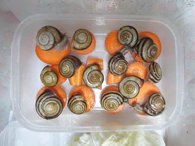 Snail, #3119