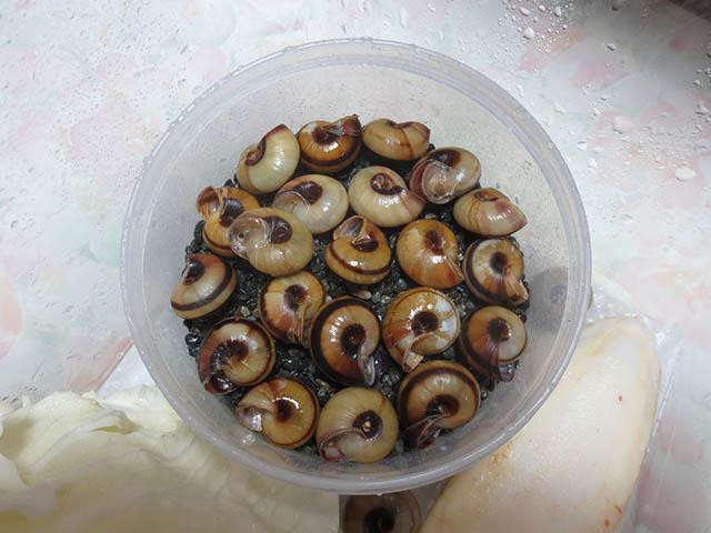 Snail, #3123