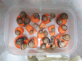 Snail, #3151