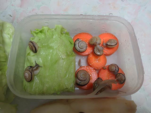 Snail, #3251