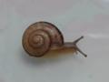 Snail, #3199 (Closeup)