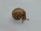 Snail, #3210 (Closeup)