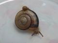 Snail, #3220 (Closeup)