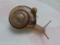Snail, #3225 (Closeup)