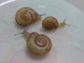 Snail, #3245 (Closeup)