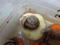 Snail, #7365