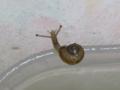Snail, #7517 (Closeup)