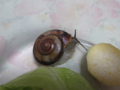 Snail, #9916