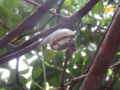 Snail, #A292