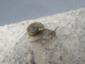 Snails, #A335