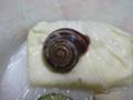 Snail, #A481