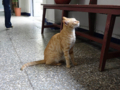 Cats of Houtong, #0006