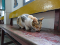 Cats of Houtong, #0008