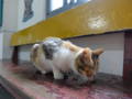 Cats of Houtong, #0009