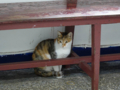 Cats of Houtong, #0019