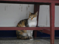 Cats of Houtong, #0020