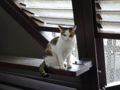 Cats of Houtong, #0021