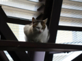 Cats of Houtong, #0029