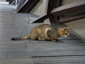 Cats of Houtong, #0031