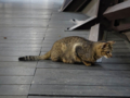 Cats of Houtong, #0032