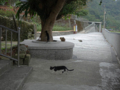 Cats of Houtong, #0056