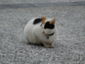 Cats of Houtong, #0066
