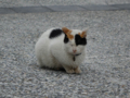 Cats of Houtong, #0067
