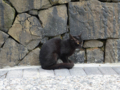 Cats of Houtong, #0086