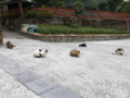 Cats of Houtong, #0088