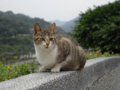 Cats of Houtong, #0093