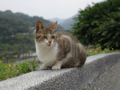 Cats of Houtong, #0094