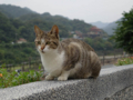 Cats of Houtong, #0095