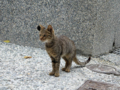 Cats of Houtong, #0096