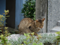 Cats of Houtong, #0098