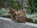 Cats of Houtong, #0099