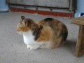 Cats of Houtong, #0101