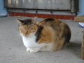 Cats of Houtong, #0103