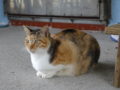 Cats of Houtong, #0104