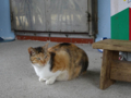 Cats of Houtong, #0105