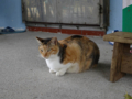 Cats of Houtong, #0106
