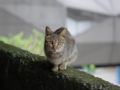 Cats of Houtong, #0107
