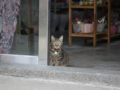Cats of Houtong, #0109