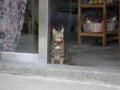 Cats of Houtong, #0110
