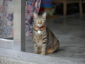 Cats of Houtong, #0112