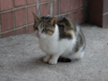 Cats of Houtong, #0140