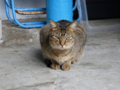 Cats of Houtong, #0302