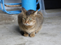 Cats of Houtong, #0303