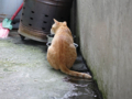 Cats of Houtong, #0309